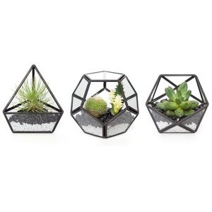 Geometric Terrarium Container Set of 3 Planter